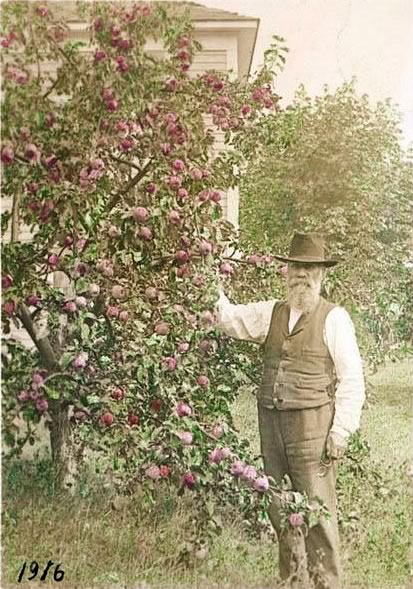 Elmer Eugene Van Olinda with apple tree, Vashon Island, 1916 ~ This lucky fellow kept his trees past 1915 ~