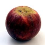 Kingston Black Cider Apple